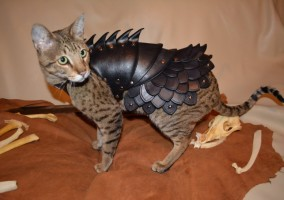armure chat medieval dragon